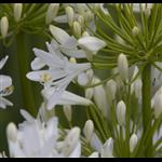 Plants  Bulbs and Seeds