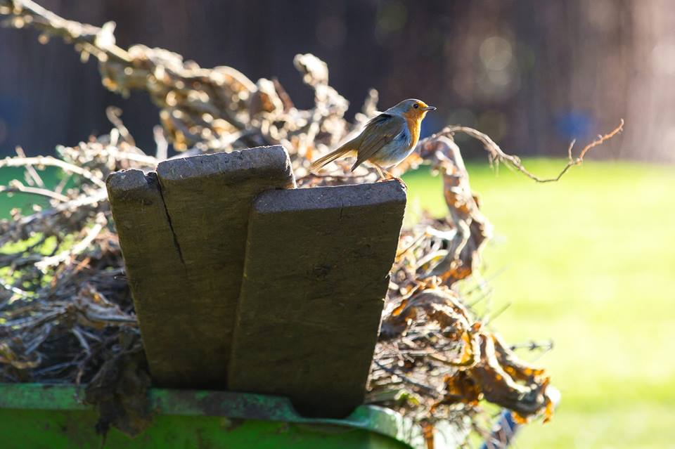 Robin sitting on top of some garden waste